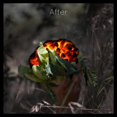 Albumhoes voor de band Bloomcoal. Bloemkool met gloeiende kolen die in een hand hoog wordt gehouden in de natuur, bewerkte foto. Commerciele fotografie.
