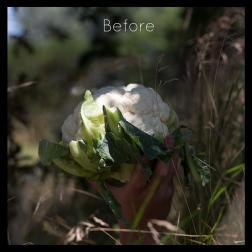 Albumhoes voor de band Bloomcoal. Bloemkool die in een hand hoog wordt gehouden in de natuur, onbewerkte foto. Commerciele fotografie.