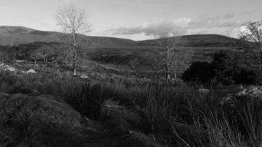 Zwart-wit foto van een landschap met twee bomen in Glenveagh National Park in Ierland. Natuurfotografie / landschapsfotografie.