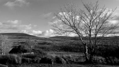 Zwart-wit foto van een landschap met een boom rechtsvoor in beeld in Glenveagh National Park in Ierland. Natuurfotografie / landschapsfotografie.