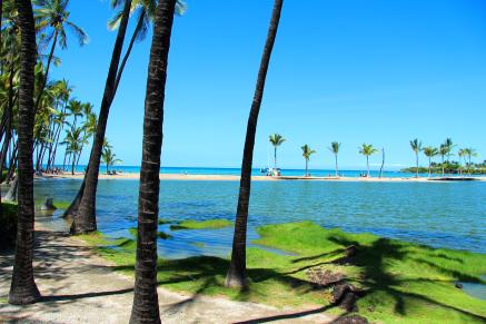 Foto genomen op Hawaii. Palmbomen op een strand bij een helderblauwe zee. Natuurfotografie / landschapsfotografie.