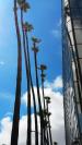 Foto gemaakt in Los Angeles. Een rij palmbomen links met een weerspiegelend gebouw rechts, van onder gefotografeerd. Stadslandschap / cityscape fotografie.