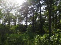 Foto genomen op Texel. Zonlicht filtert door de bladeren aan de bomen. Natuurfotografie / landschapsfotografie.